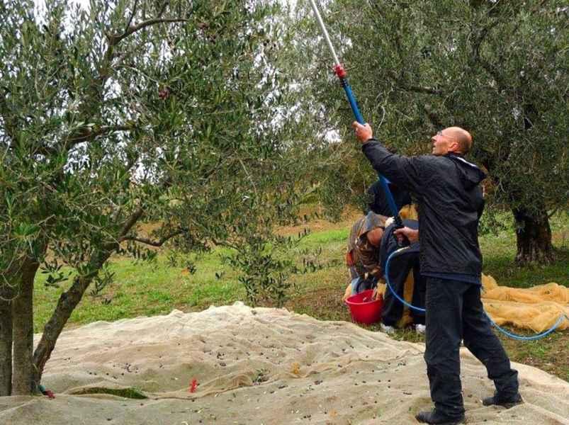 Agriturismo biologico design con piscina Gaiattone Assisi Umbria. Produzione di olio extravergine di oliva BIO
