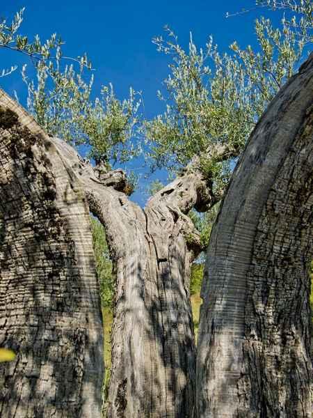 Assisi appartamenti vacanze di lusso in campagna. Umbria Gaiattone eco resort