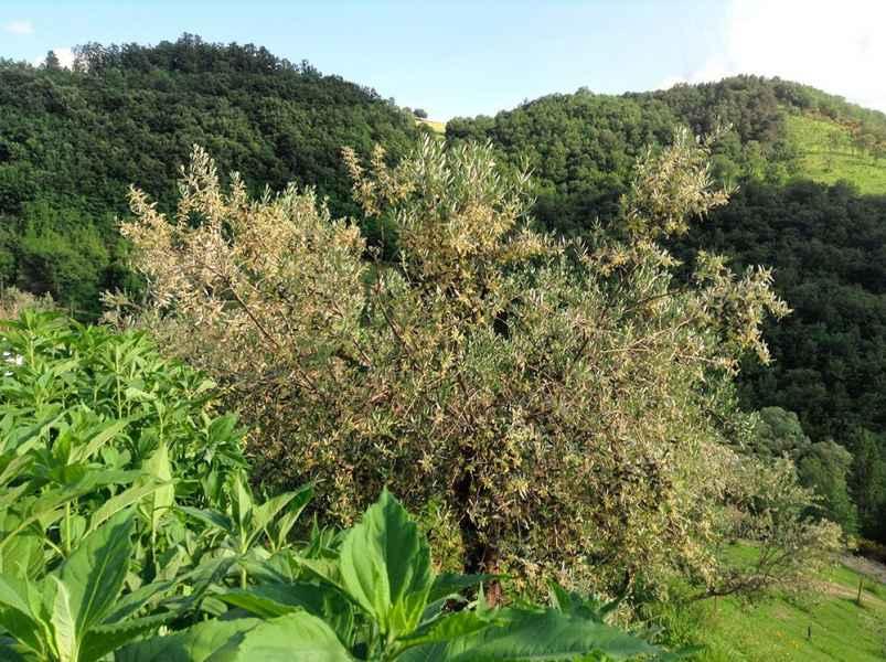 Gaiattone Eco Resort per le tue vacanze a Assisi in appartamento. Turismo Verde