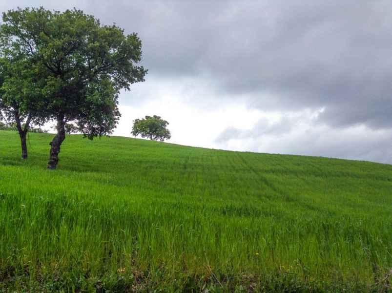 Agrotourisme bio Gaiattone. Tourisme rural luxe et simplicité sul les collines d'Assise, Ombrie, Italie