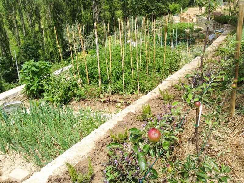 Agrotourisme BIO Gaiattone Assise: jardin potager, truffières, oliveraie et champs pour la prodution des légumes BIO. Ombrie, Italie